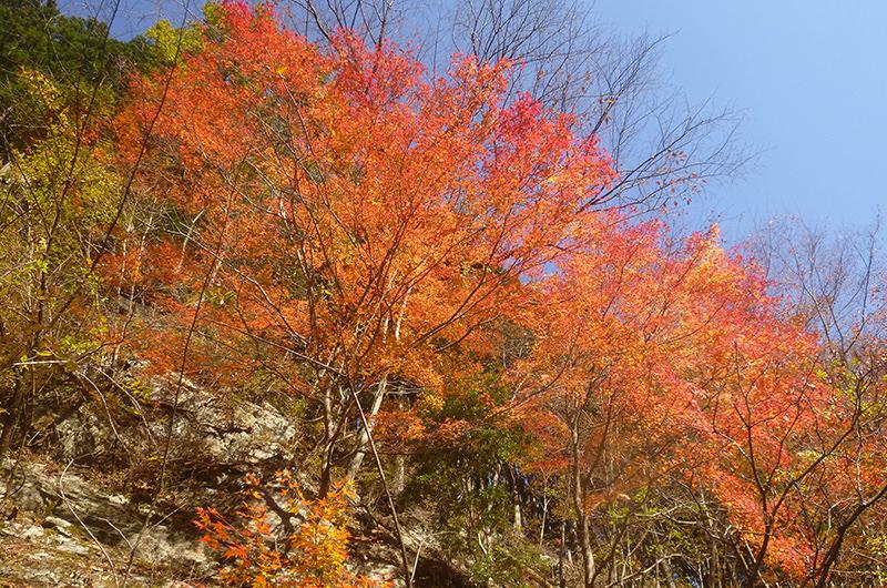 11月 桧塚登山道の紅葉