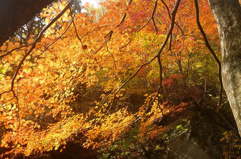 貝月山の紅葉 10月