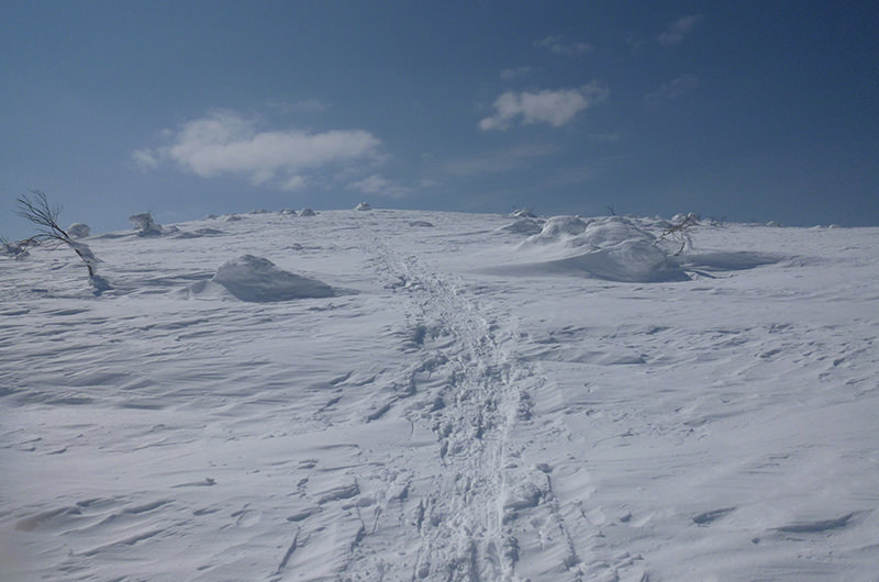 無意根山頂上直下 4月